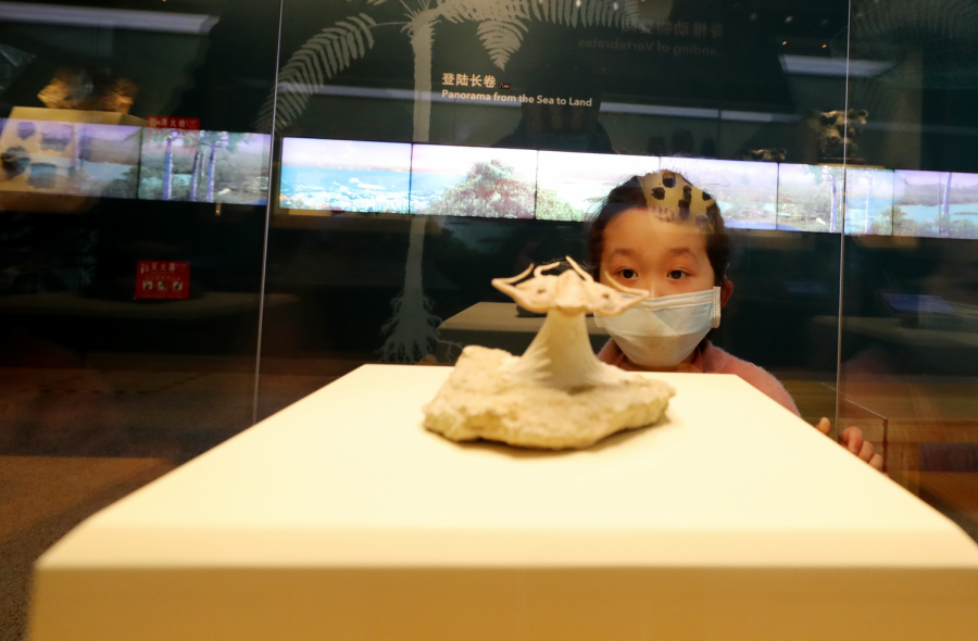 A curious child examines a museum artifact in China, where life is slowly returning back to normal in light of COVID-19 restrictions. (South China Morning Post)